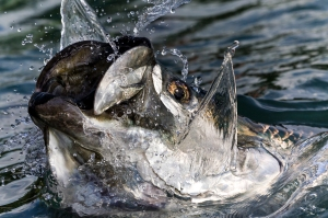 Jumping Tarpon blog