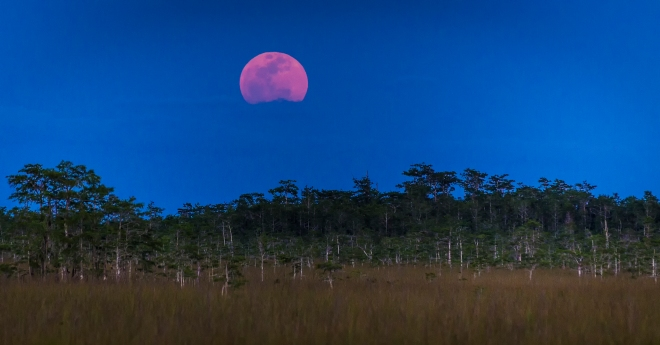 Super Moon in the Everglades